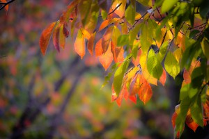blog-autumnleaves1